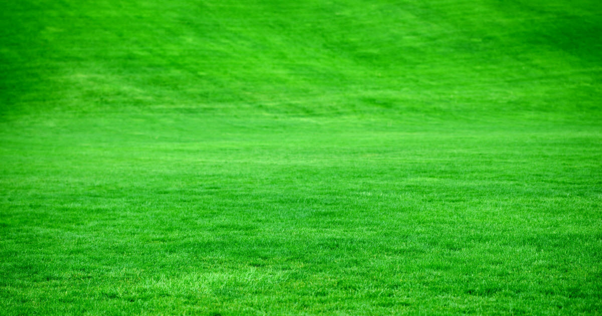 What Is The Best Gr Seed For Overseeding Lawn