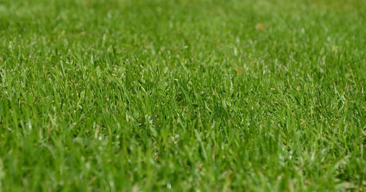 Is Zoysia Better Than Bermuda Grass