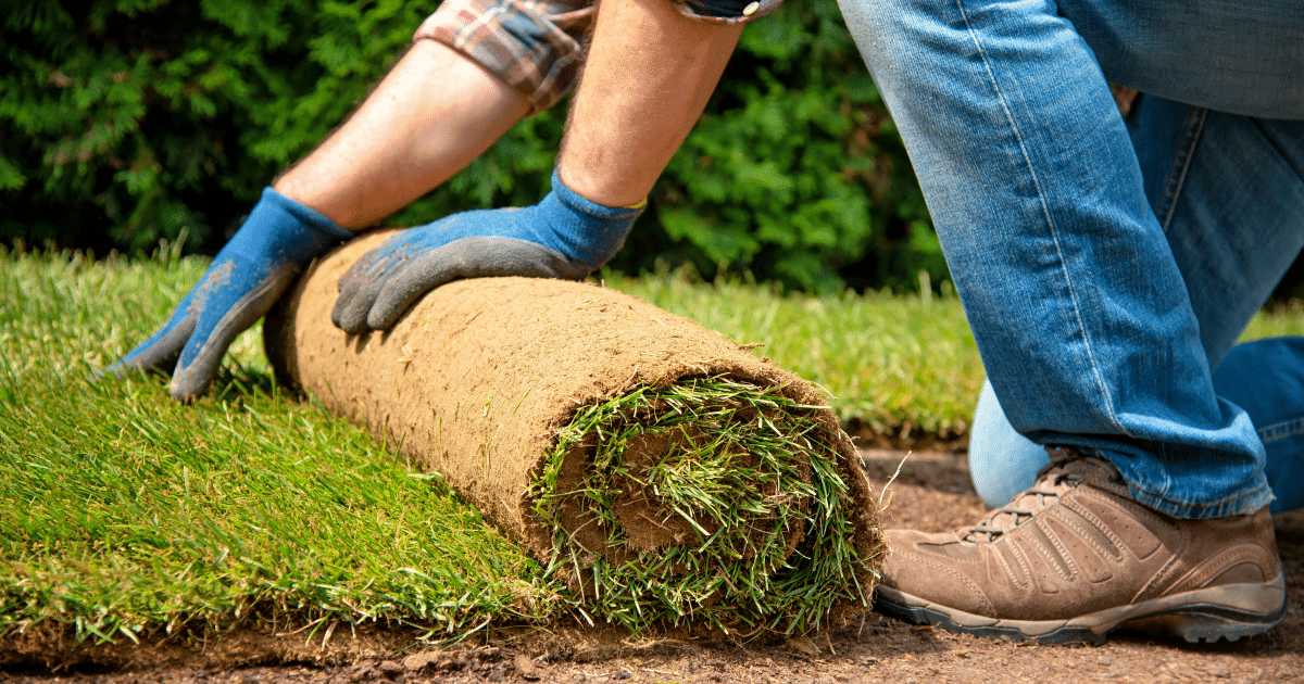How To Lay Sod The Ultimate Guide Lawn Chick